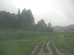 雨風が強くなってきた。。。
