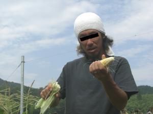 春に植えたトウモロコシ