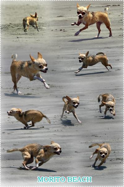 yuzu run
