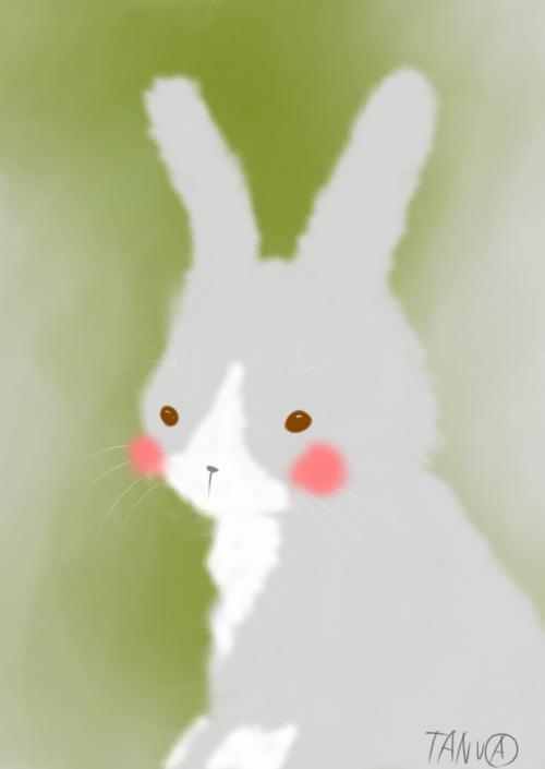 モコモコウサギ