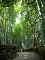 Kyoto2009Aug8.jpg