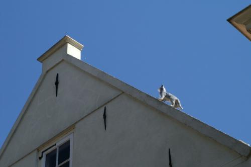 屋根のねこ
