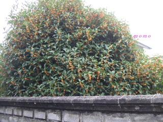 2008_100708、秋祭り0032