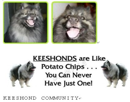 Keeshond Community Logo