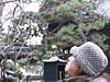 yukibe