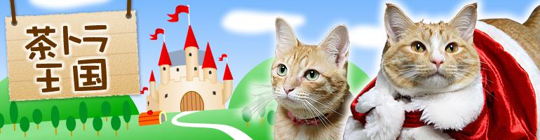 茶トラ王国 気がつけば、茶トラ猫が5匹!!!天然メタボのかりん・チャキチャキ娘のあんずと里親さん募集中の甘えん坊:ゆず・みかん・りんごの猫猫ライフ