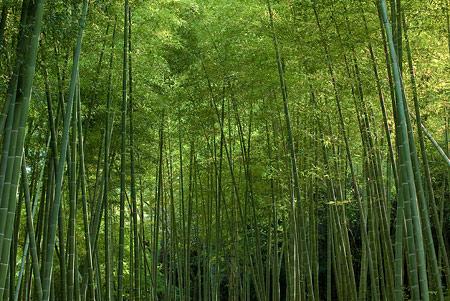 森林公園1-1