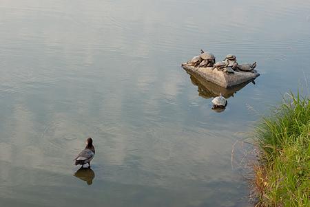 杁ヶ池公園-8