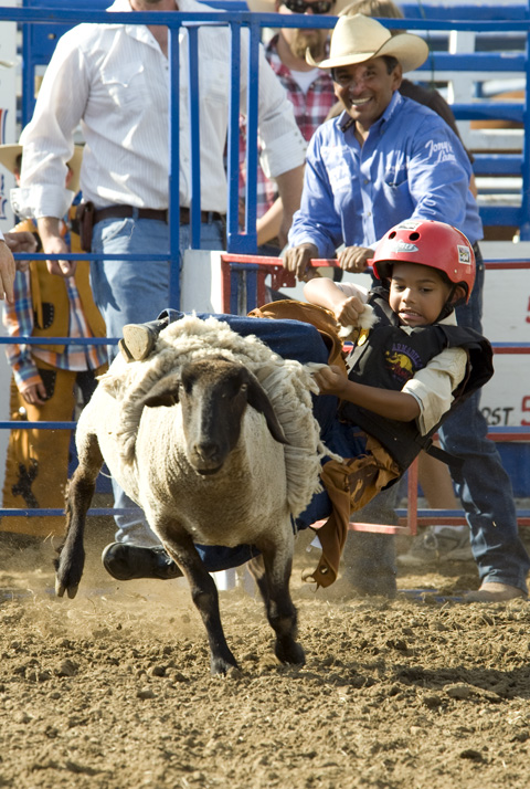 Mutton Busting for Children: 子供たちの羊乗り競争